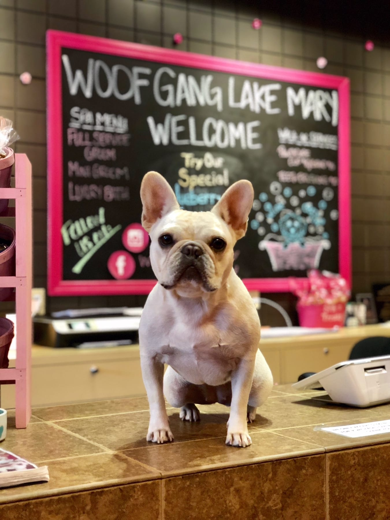 Dog on counter at Woof Gang Bakery store