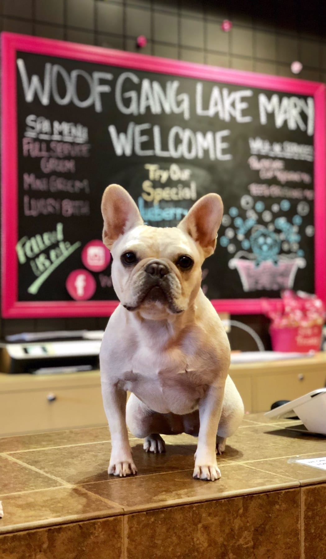 Mobile version of dog on counter at Woof Gang Bakery store