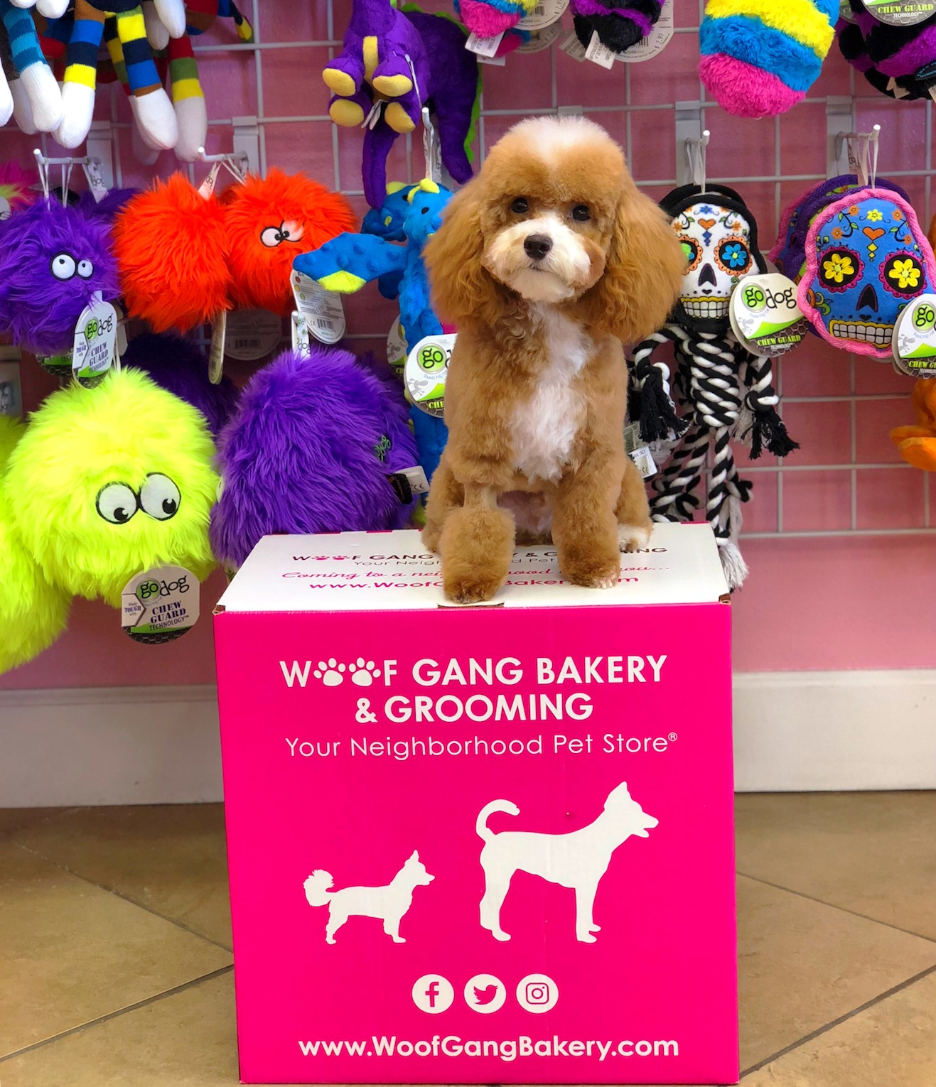 Fluffy little puppy on a Woof Gang Bakery box