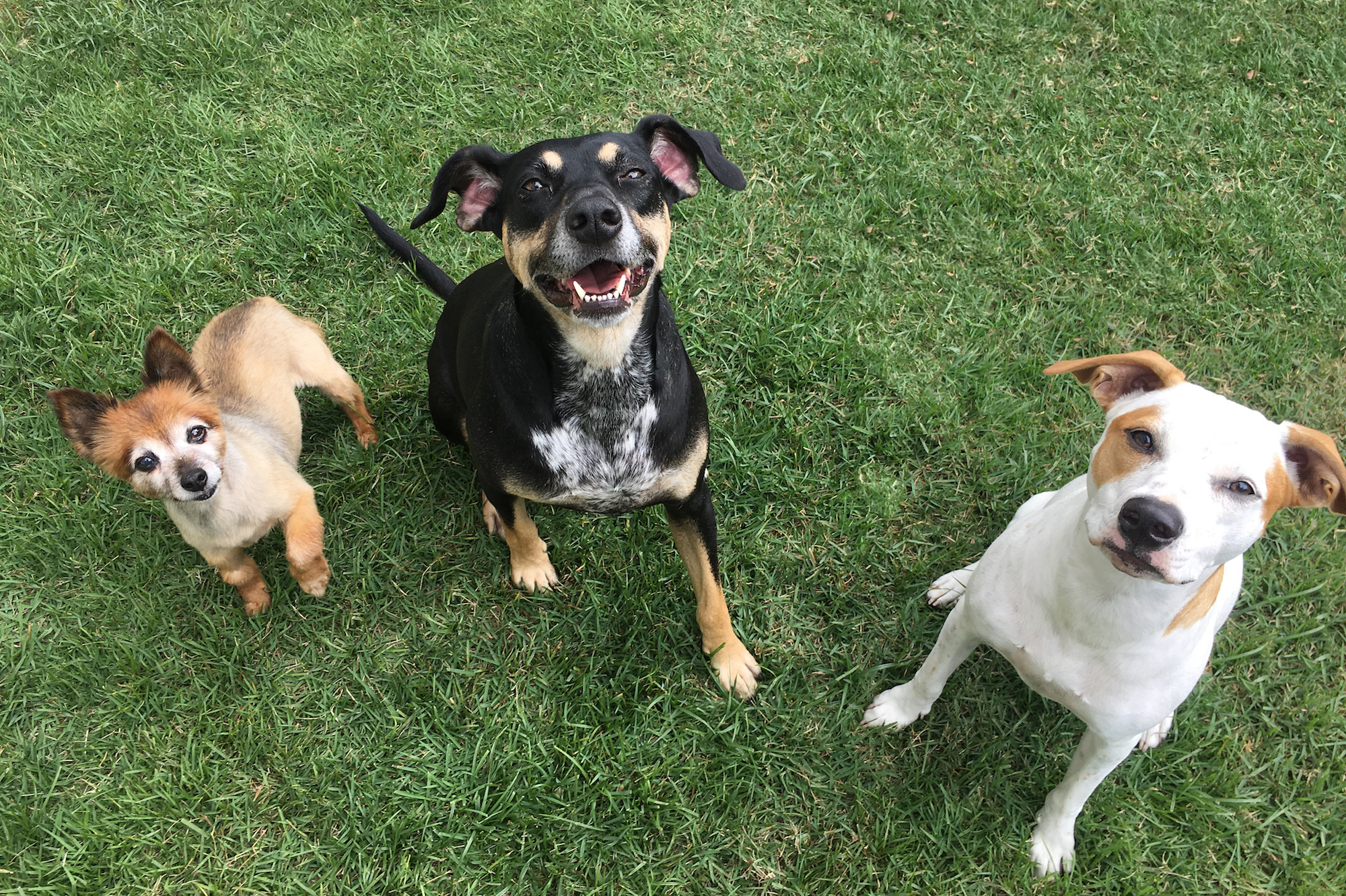 Three dogs in yard