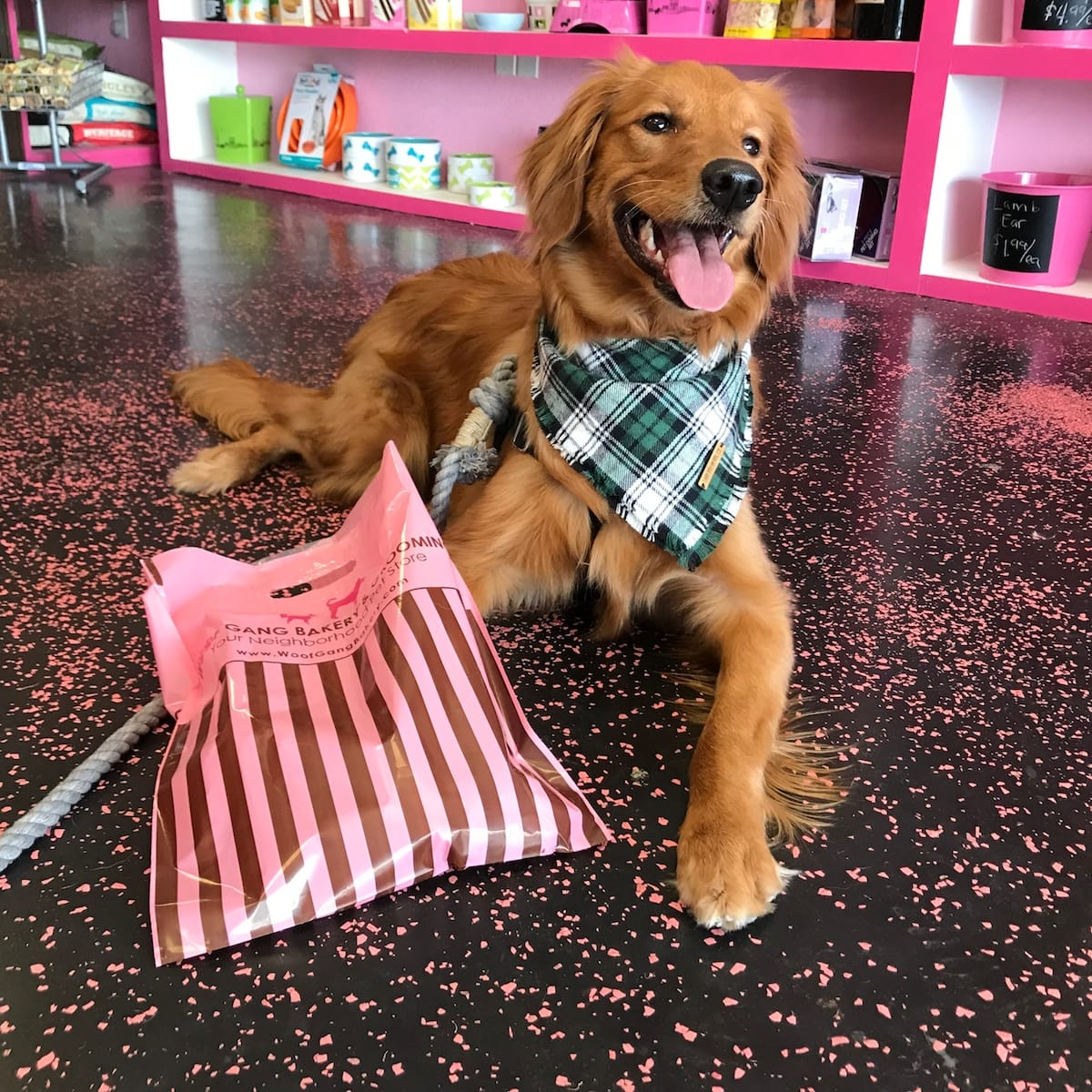 Golden Retriever With A Woof Gang Bakery Shopping Bag